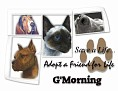 dcd-G'Morning-Adopt a Friend.jpg