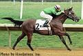 BIG EASY 1997 bay stallion