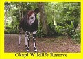 Okapi Wildlife Reserve 1