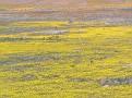 Poppy Reserve2008 050.jpg