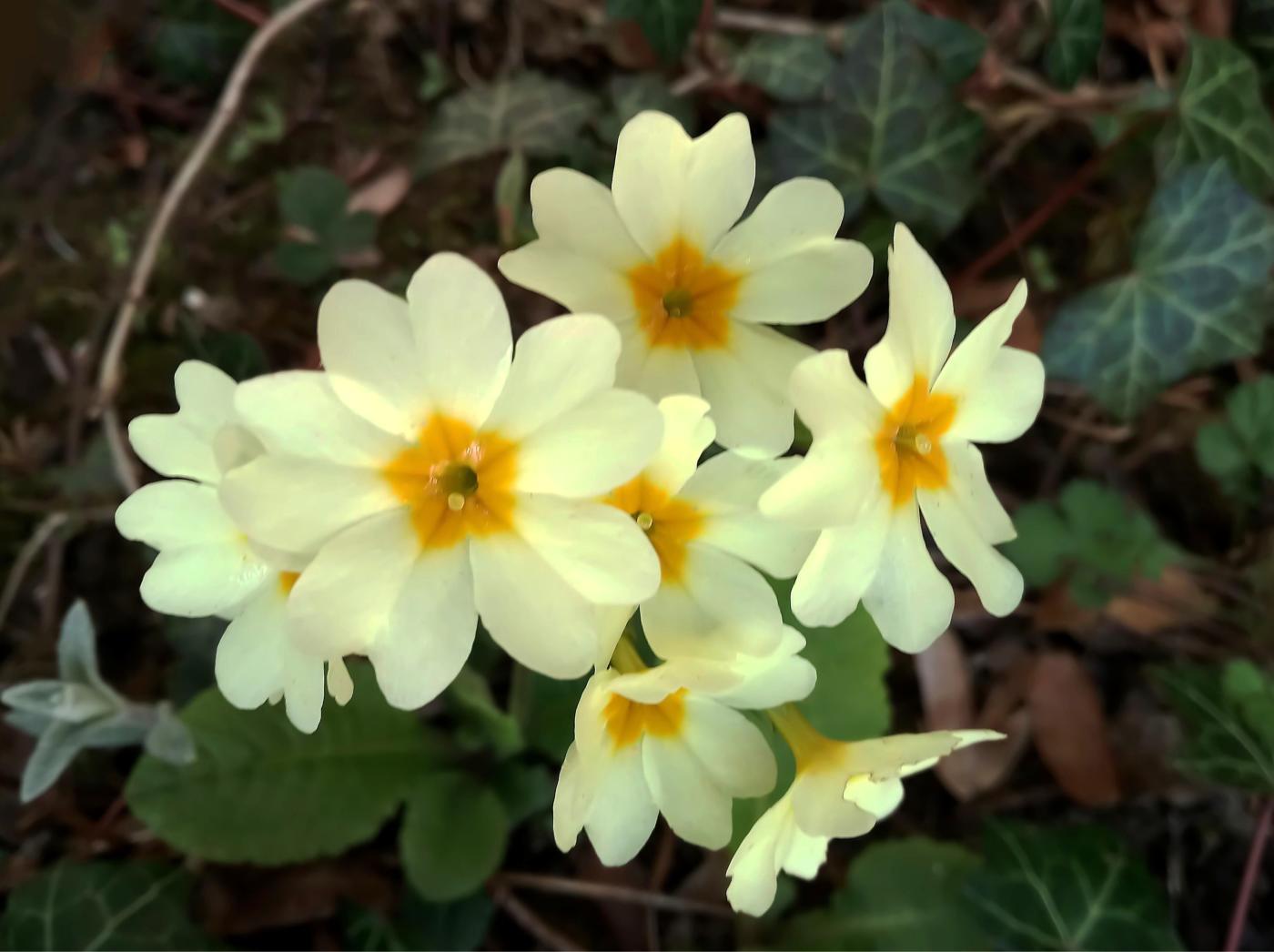 Zarter Frühlingsgruß