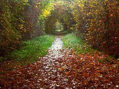 Tunnel durch den Herbst