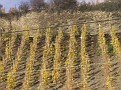 these are winefields - all growing on such a high slope