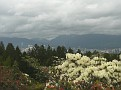 We leave the Dr Sun Yat Sen Gardens and travel 15 min south to Queen Elizabeth Park.  This park is created in an old rock quarry, it is now a giant hole in the mountain where the rock has been removed.  This is the view of downtown from the top of the hil