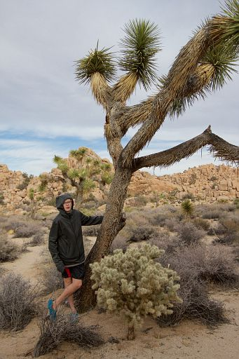 Joshua tree and boy