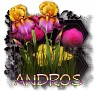Andros - 3094