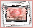 Best Friend-gailz-pink rose