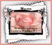 Maureen-gailz-pink rose