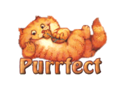 Purrfect - SpringKitty
