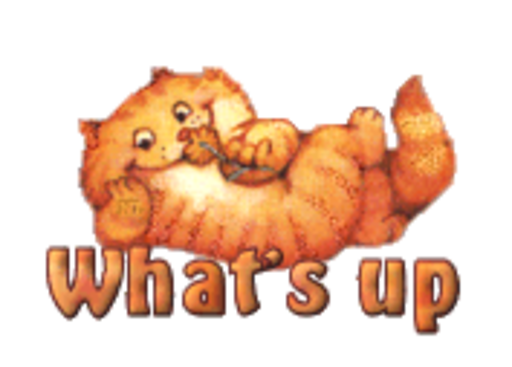 What's up - SpringKitty