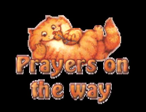 Prayers on the way - SpringKitty