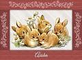 Aisha-gailz0407-NC_RM_SL_BabyRabbits.jpg