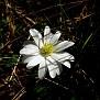 anemone bla (7)