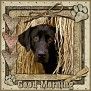 dcd-Good Morning-In The Hay
