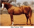 ABU FARWA 1940-72 chestnut stallion (Rabiyas x *Rissletta, by Naseem)