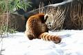 070216 Natl Zoo224