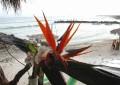 Playa Anclote