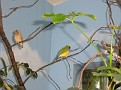 2007 Toledo Zoo 053