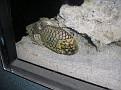 2007 Toledo Zoo 082