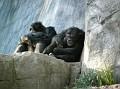LA Zoo 015
