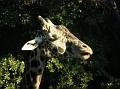 LA Zoo 041
