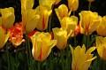 20070505 - Brooklyn Botanical Gardens - 05-sm