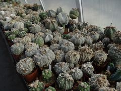 020 this part, used for seed production the best Hybrids from this plants..