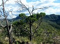 Gould's Circuit Walk in the Warrumbungles National Park 085