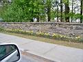 Flowers alongside the road in Hyde Park. Taken 5/8/11