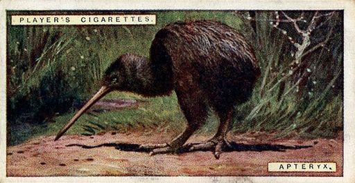 1924 Player's Natural History #06 (1)