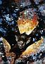 Batman Master Series Artist Proof #22