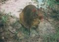 KL Zoo 029