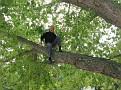 Hiromi, Soji and I Climbing the Maple Tree in my Driveway  (13)