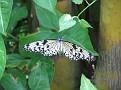 Butterfly World Butterflies Close Up19