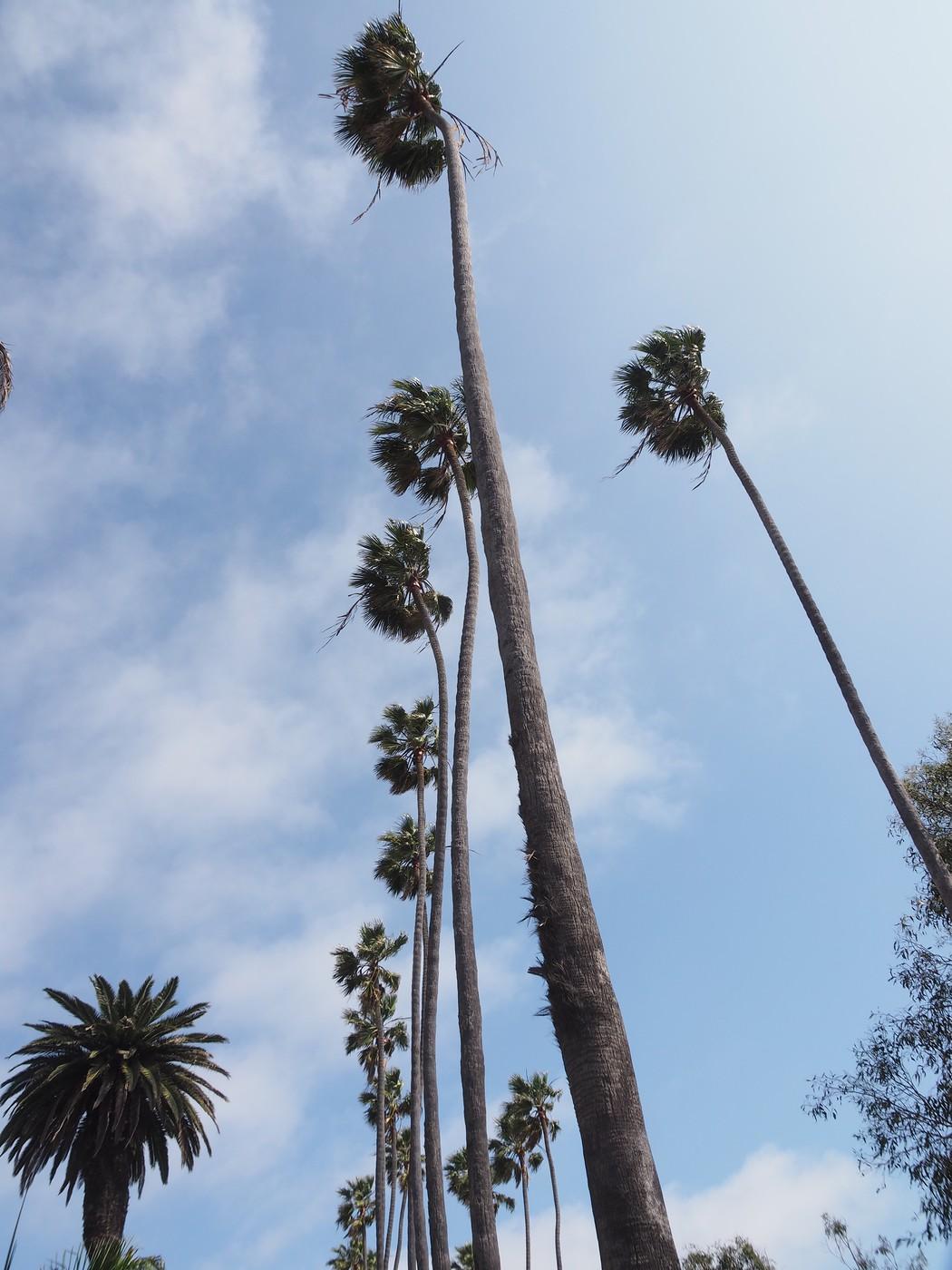 muertes automovilisticas california