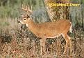 07- MI State Animal