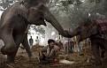 best animals2011 33