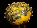 Astrophytum KABUTO NISIKI variegata