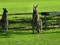 2011 10 11 12 Nelson Bay Golf Club