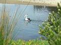 2009 10 29 31 Port Kembla