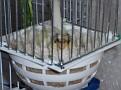 Leucothea nesting 27-1-2010