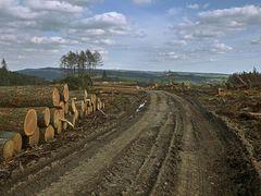 Waldweg ohne Wald