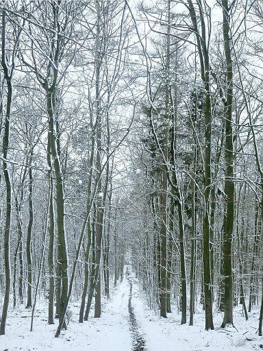 Reiner Wald