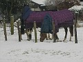 Chilly Horses