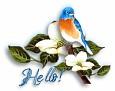 bluebird-hello