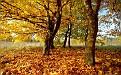 autumn-wallpaper-1680x1050-021