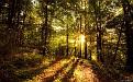 forest-wallpaper-1680x1050-005