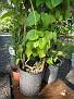 Plants Names DX7 117