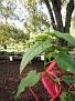 Plants Names DX7 135