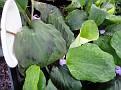 Plants Names DX7 137